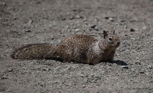 IndyCar Drivers Declare War on California Squirrel Population